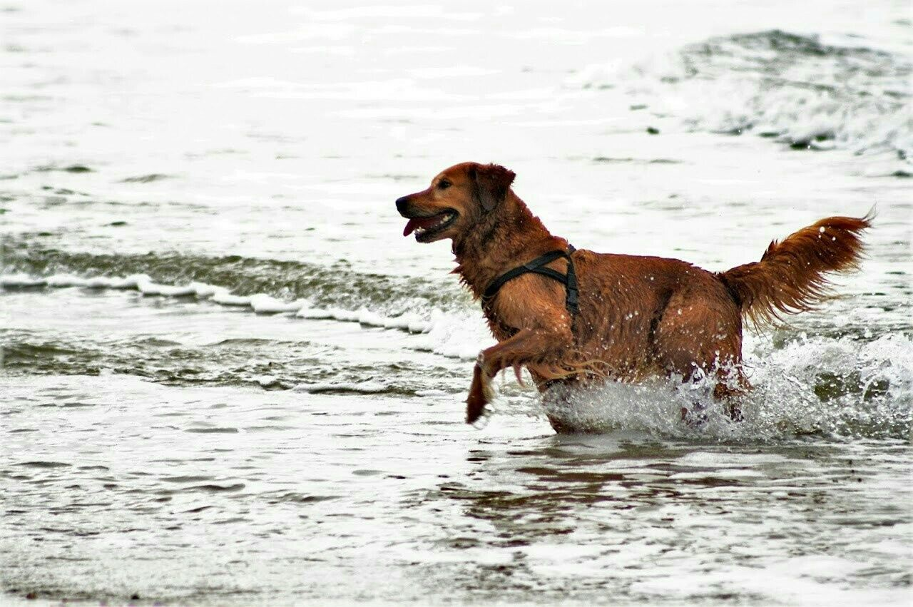 Dk2015 Dog Sea Enjoying Life Tadaa Dänemark Beachphotography Travel Photography Animal Themes Hennestrand