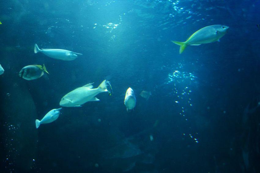 Cobalt Blue By Motorola Fish Blue Water Ocean Nature Sea Animals Beautiful Taking Photos
