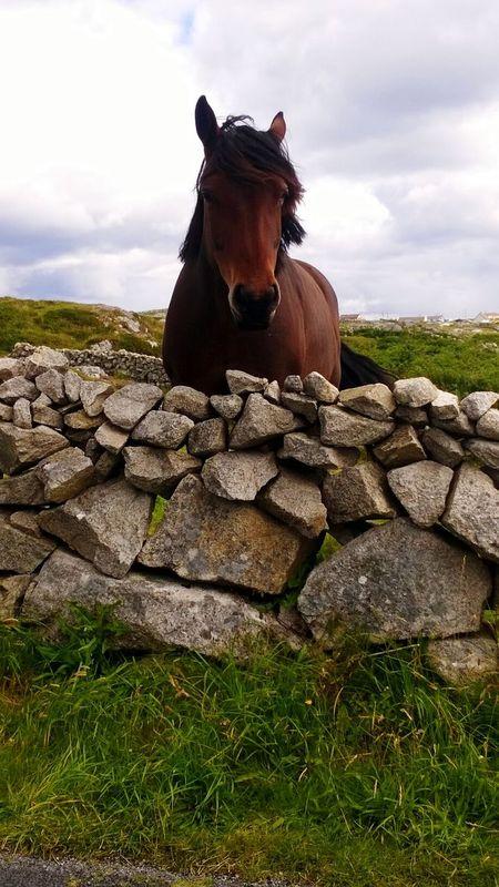 Horse Cavallo Ireland Traveling Freedom Wild Capturing Freedom Taking Photos Relaxing Lookingaround
