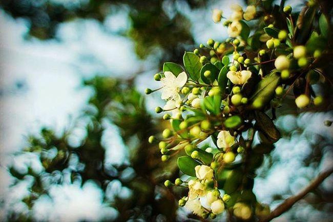 Little sunshine Lr5 Landscape Flowers Flowerstagram Yellow Photographer Puppyedition 28mm Canon T5 Vscocam Green Nature Naturelovers