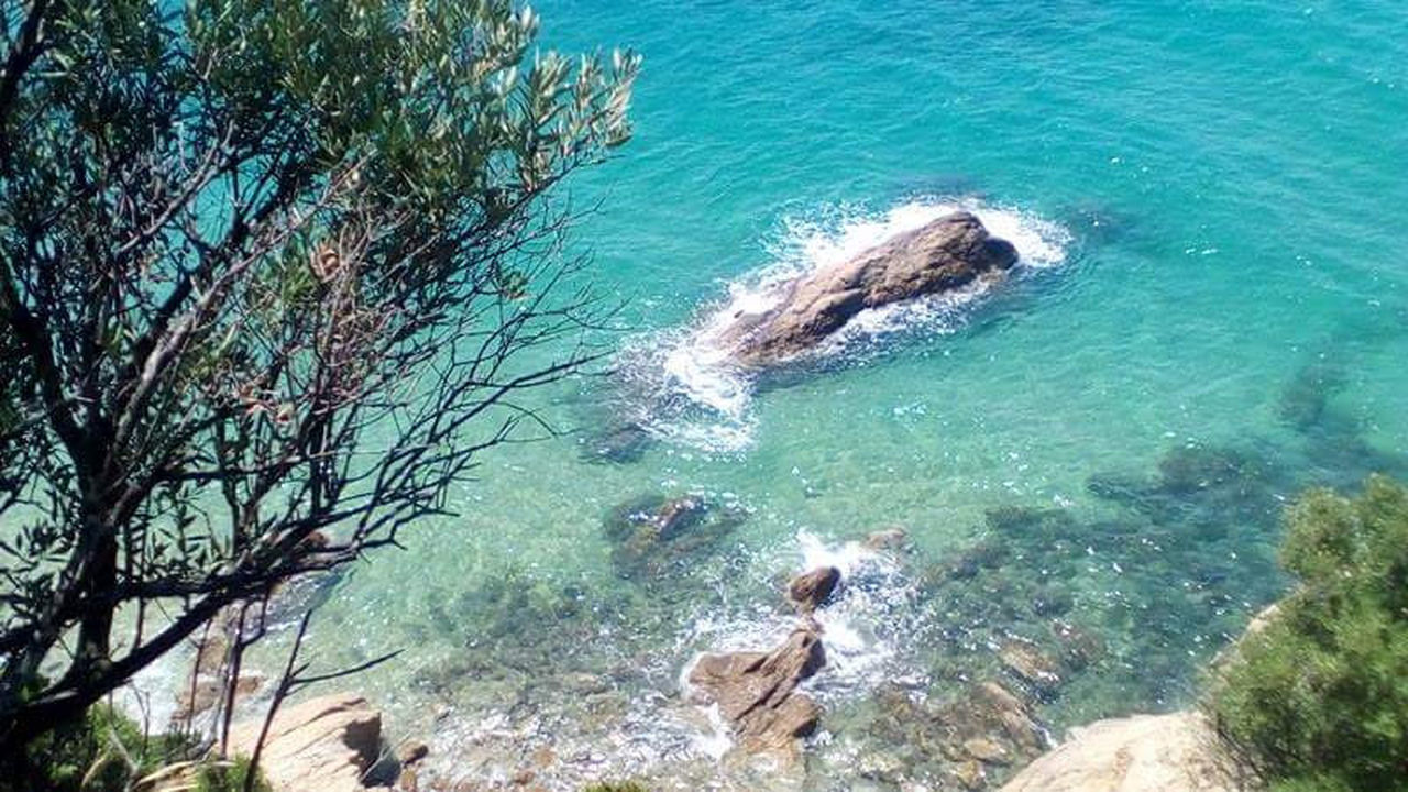 sea, water, nature, high angle view, rock - object, beauty in nature, day, outdoors, no people, scenics, tree