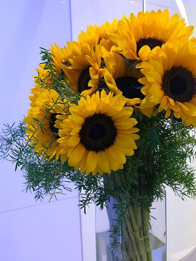 Flower Yellow Fragility Freshness Petal Beauty In Nature Flower Head Nature Growth Botany No People Sunflower Day Low Angle View Plant Blooming Outdoors Springtime Close-up Indoors  Bloomberg Building