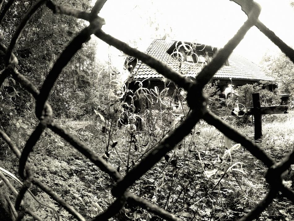 """""""the witchhouse"""" Fence Houses House Facade Spooky Witch Witchhouse Nature Growth Plant Low Angle View"""