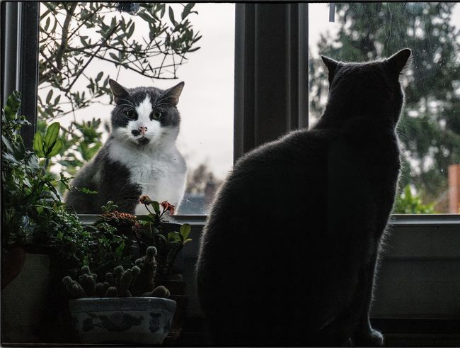 J'veux rentrer... J'veux sortir... 🐱🐈 Cat Lovers Cat Landscape_Collection Animal Photography Authentic Moments Eye4photography  Eyeem France Pets Pet Photography  Houses And Windows Window House Cats