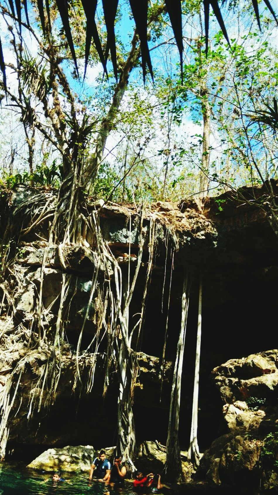 Nature Cenote Cabaña Arboles , Naturaleza Tranquility Beauty In Nature Yucatan Mexico Travel Destinations Sky Nature_collection