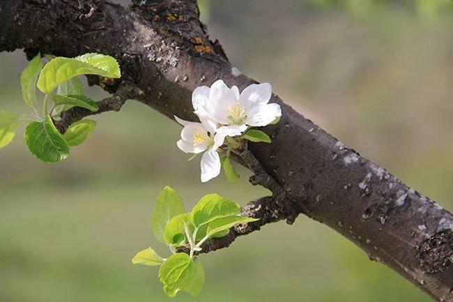 Natura Landscapecaptures Fioribianchi Flowers Lule Pranvere Primavera Spring