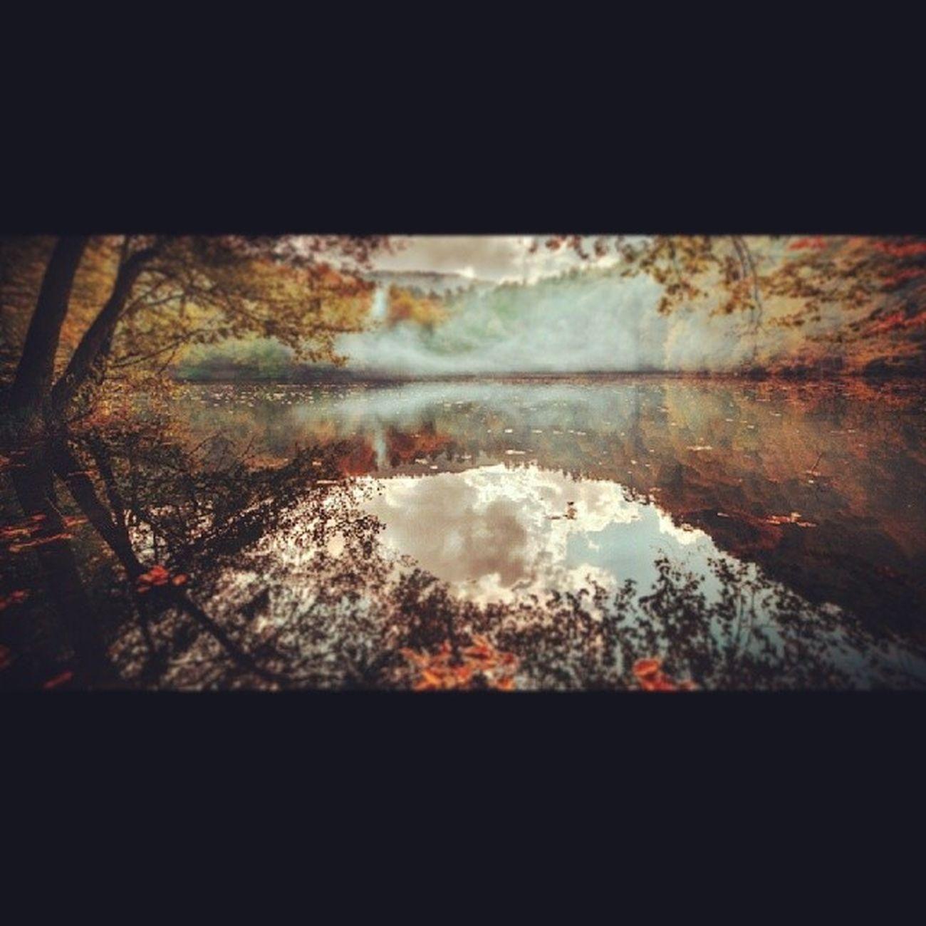 Hayatakarken Anıyakala Bolu  Yedig öller manzara landscape göl lake fog sis Turkey tree ağaç photographers_tr sonbahar auntum turkinstsgram aniyakala