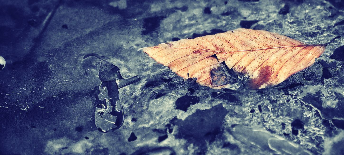 Just a few leaves Suspended Frozen in the winter Deepfreeze | Nature_collection Colorsplash EyeEm Nature Lover EyeEm Best Edits
