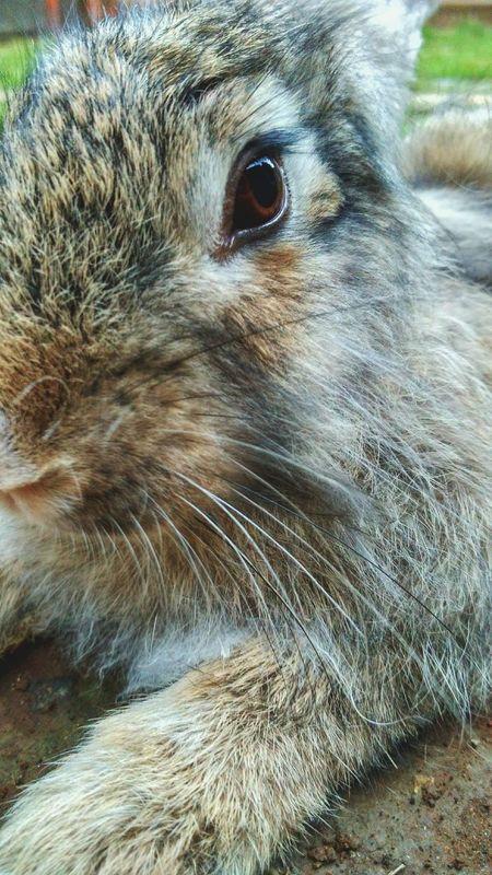 """"""" Kelinci Rabbit :) FLUFFY BUNNY Rabbit Face Bunny  Animals Posing"""