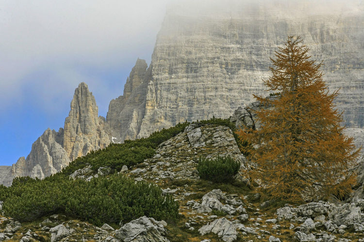 Nature Dolomites, Italy Tranquil Scene Landscape Trees And Nature No People Outdoors Day Mountain Range