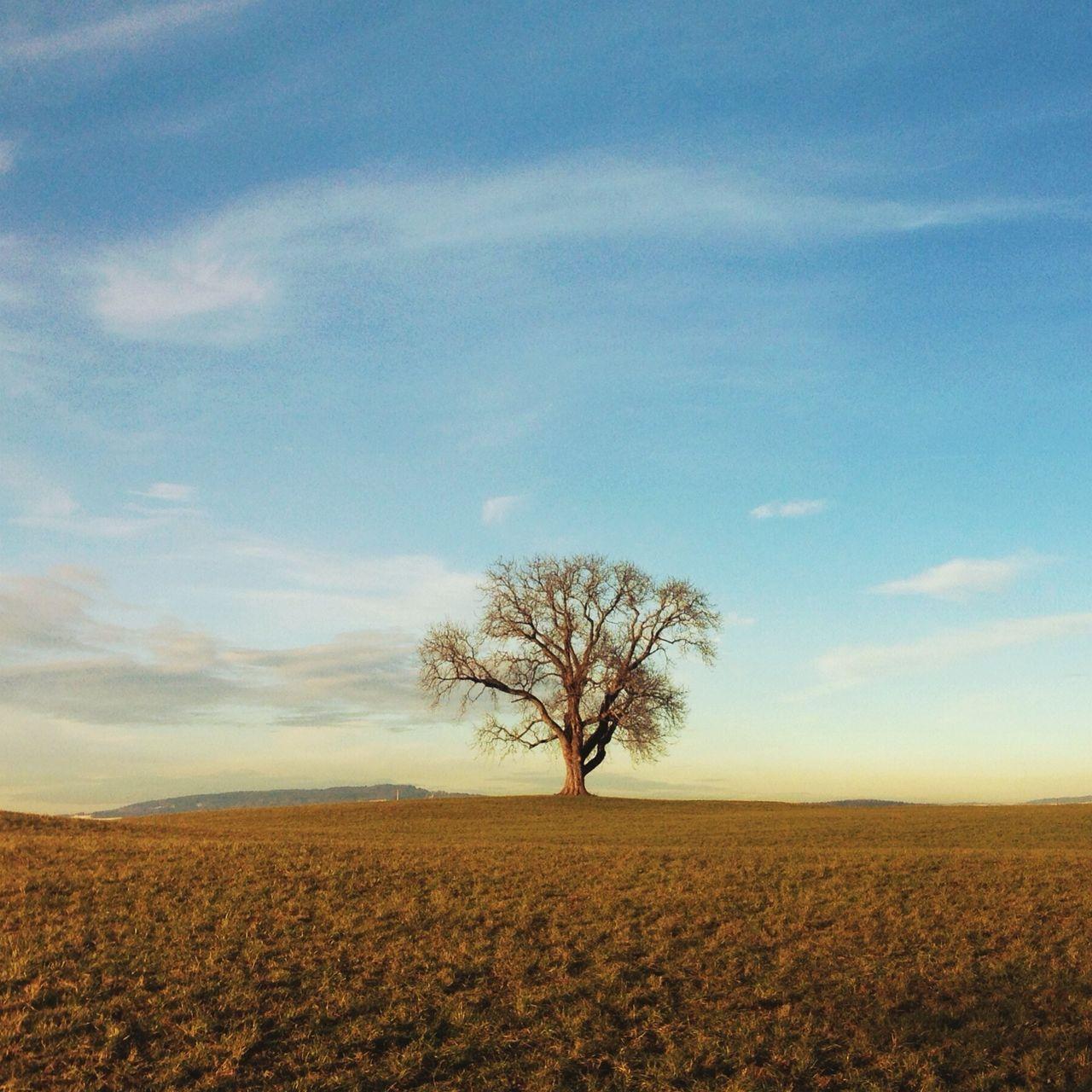 Bare tree on grassy landscape against sky