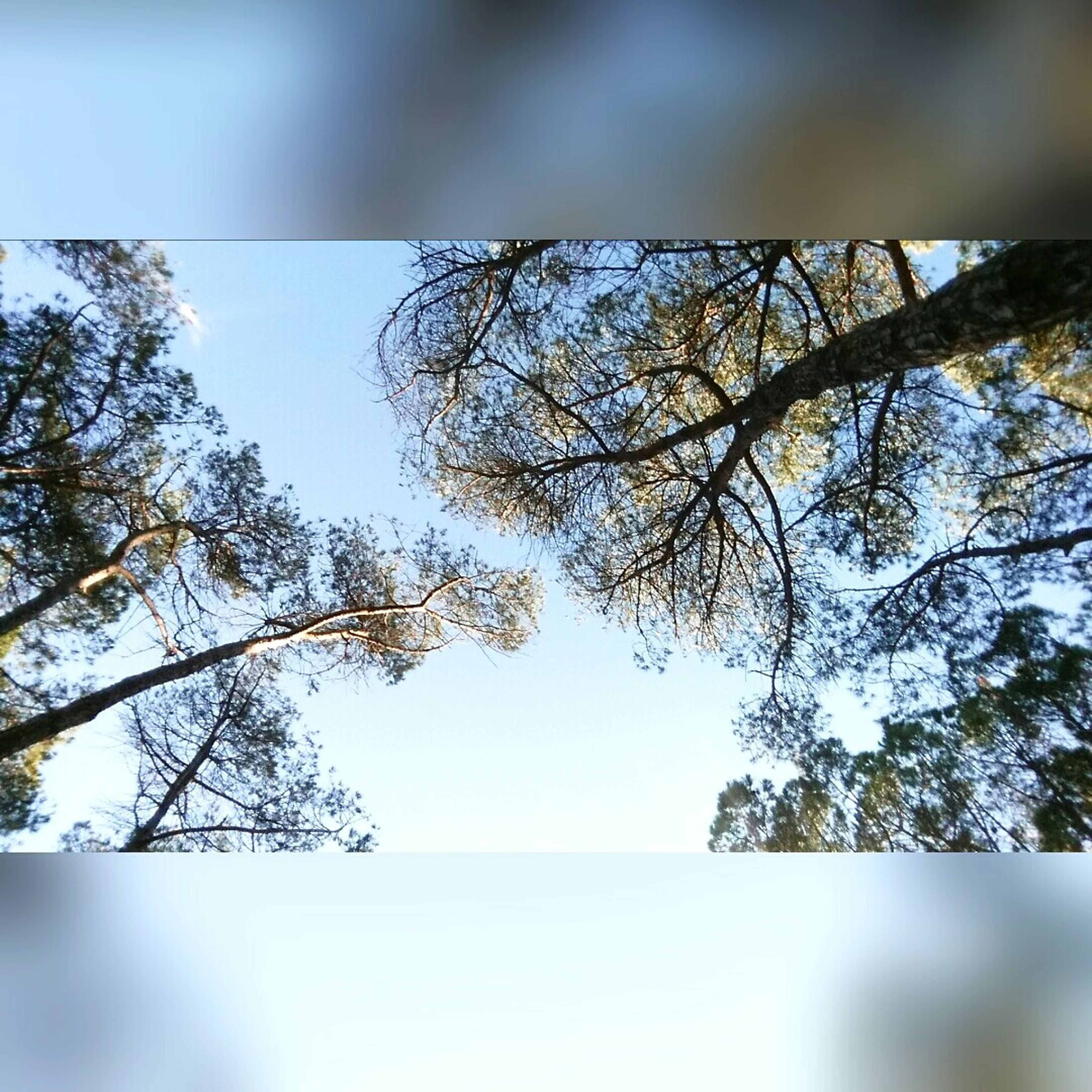 tree, sky, nature, no people, beauty in nature, outdoors, clear sky, scenics, branch, day, water, close-up