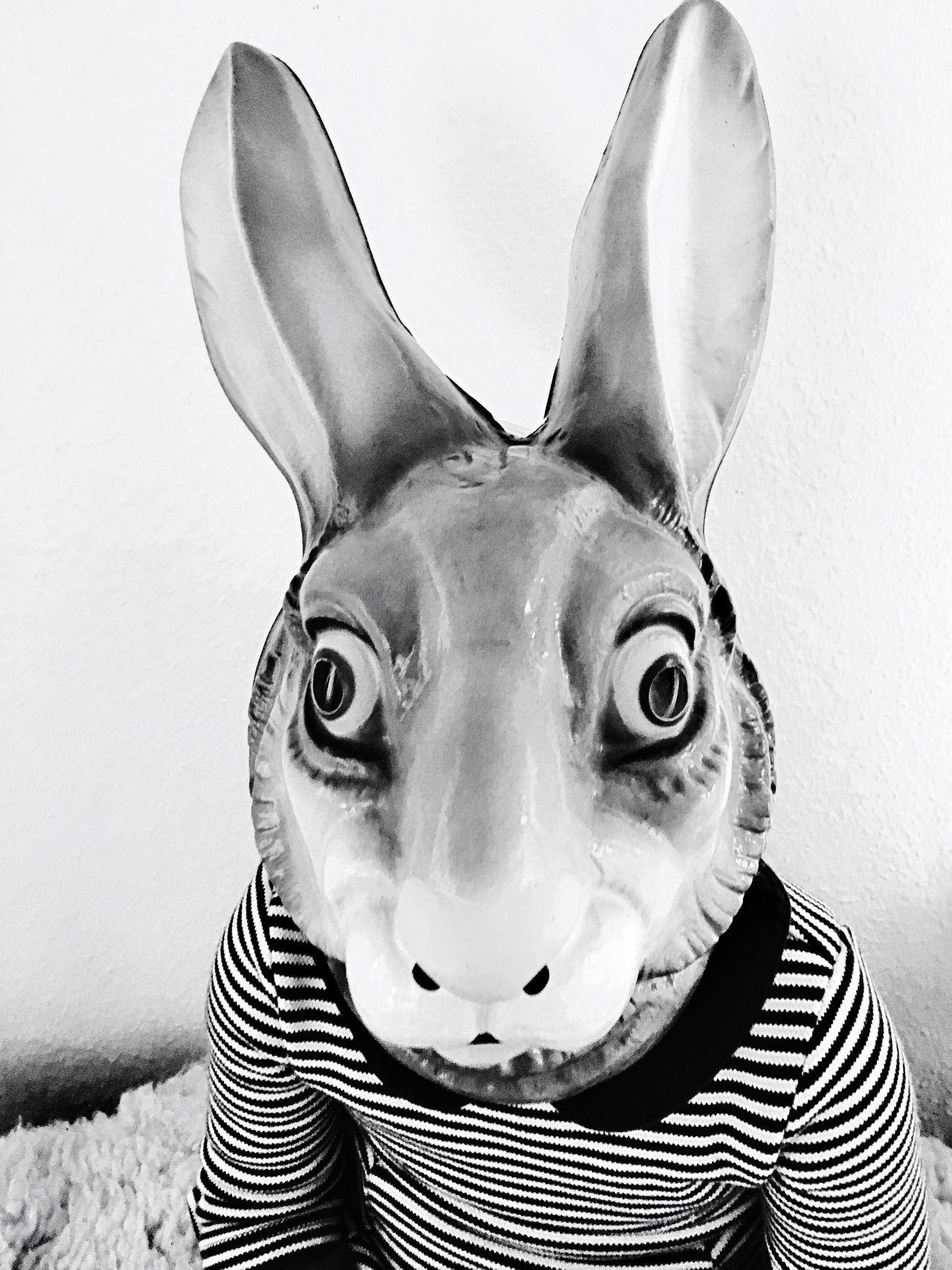 Happyeaster Bunny