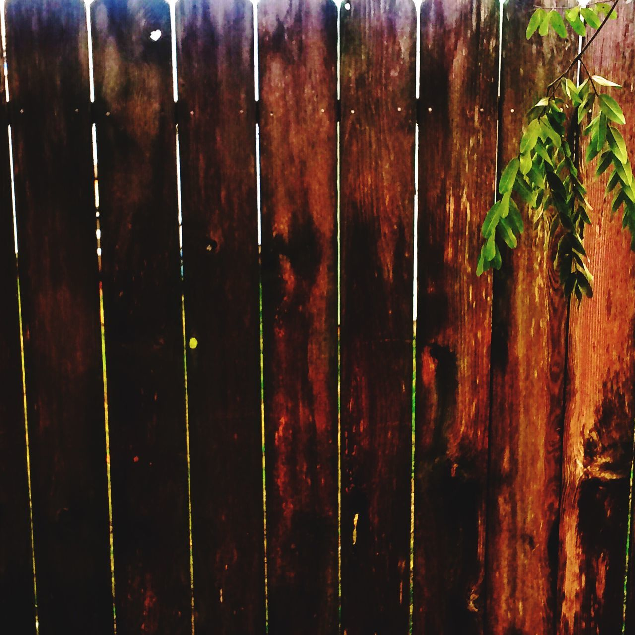 Wood - Material No People Hanging Textured  Close-up Backgrounds Nature Outdoors Day