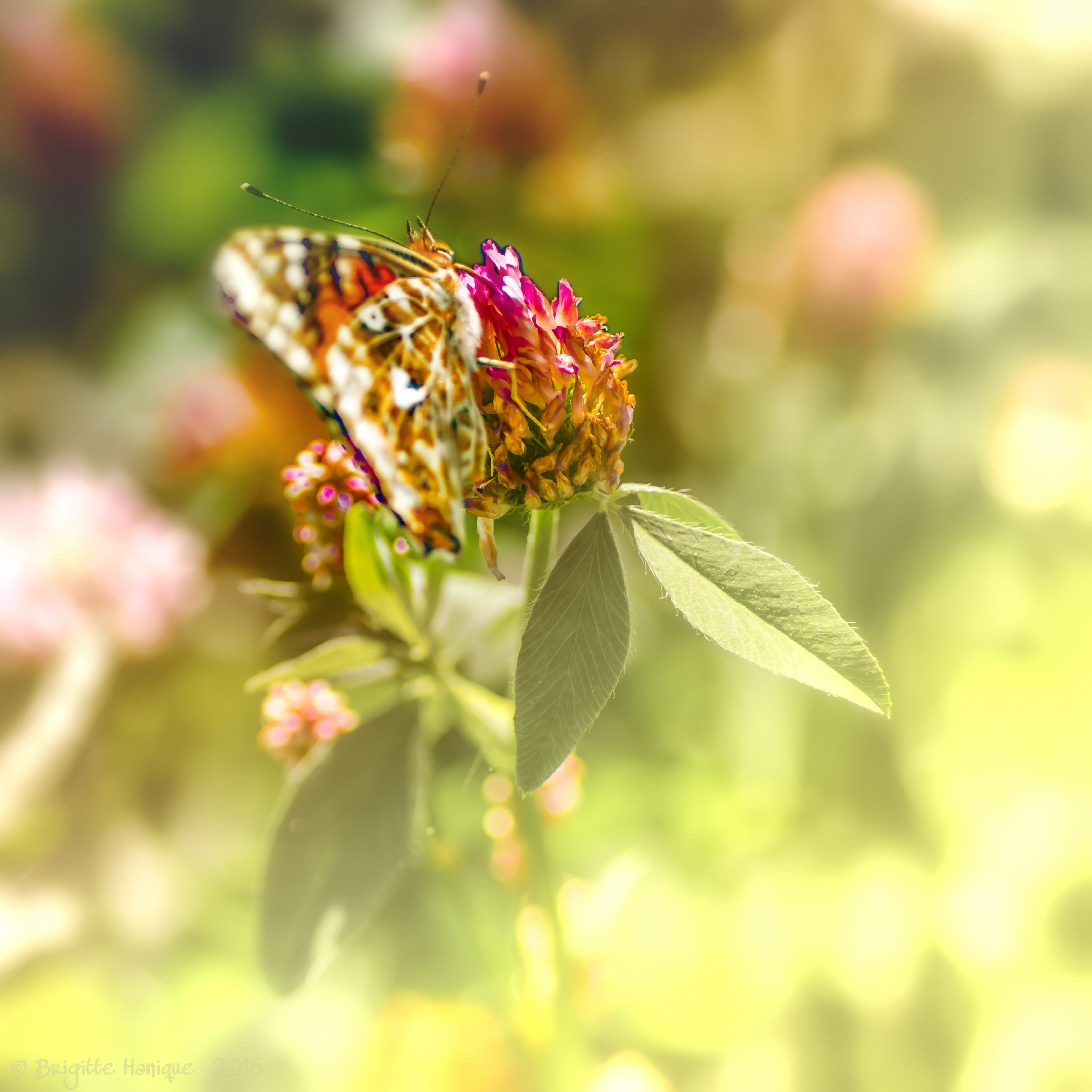 flower, leaf, freshness, fragility, growth, close-up, plant, beauty in nature, focus on foreground, season, nature, stem, springtime, in bloom, petal, day, botany, flower head, pink color, green color, red, green, outdoors, plant life, blossom, tranquility