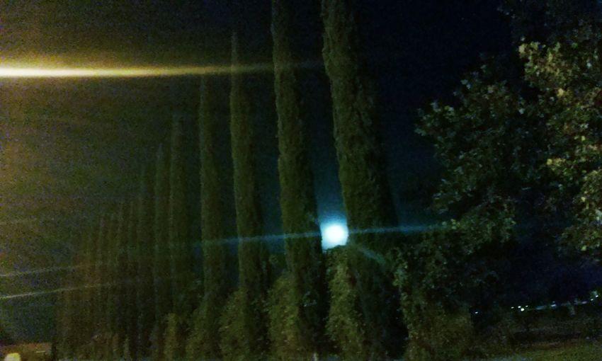 Night Moon Urban Geometry Tree