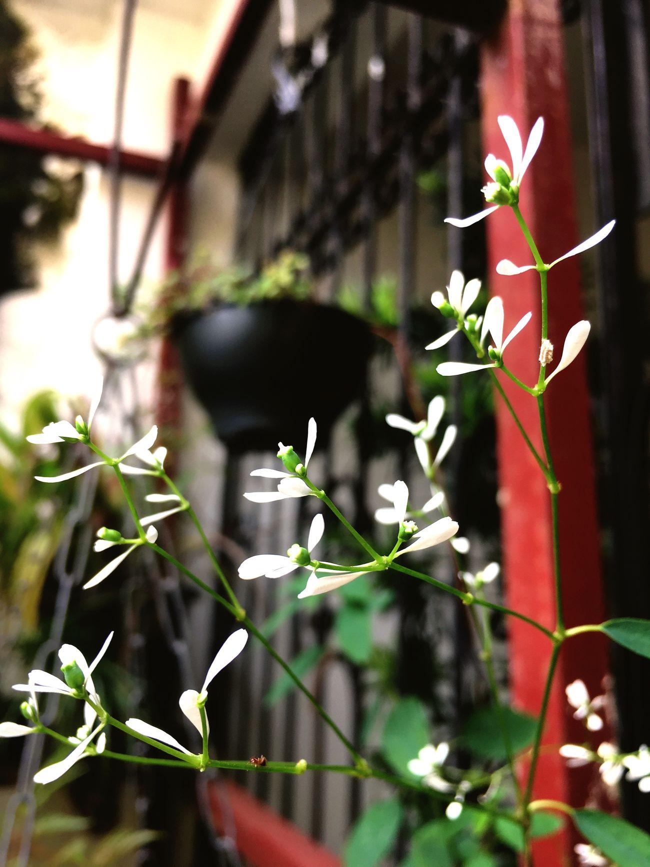 Flores em tudo que vejo First Eyeem Photo