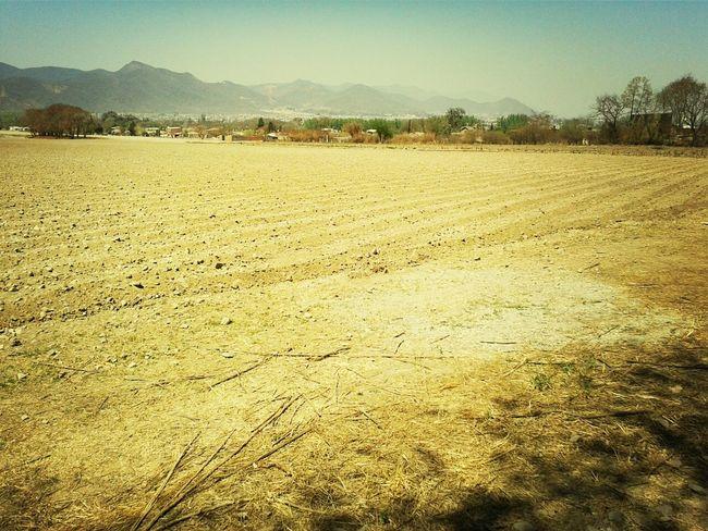 campo Farm