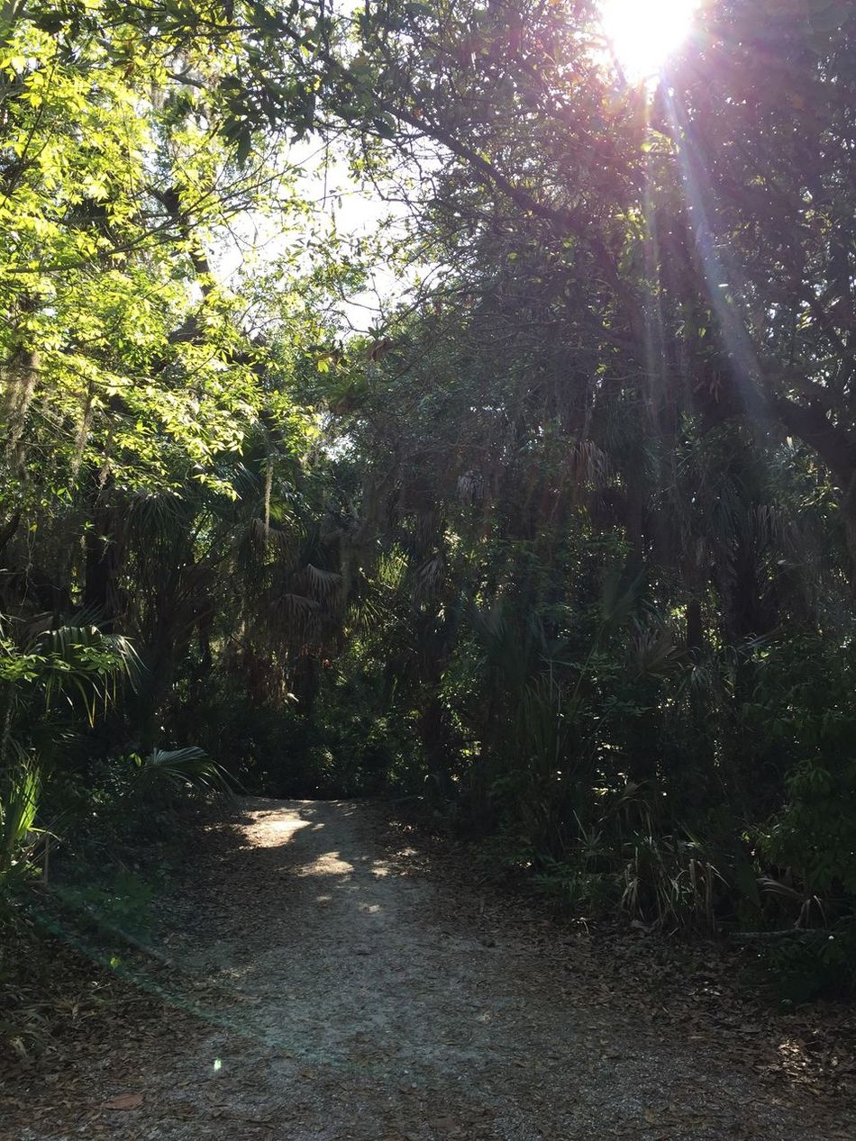 Lens Flare Outdoors Nature Paths Pathway In The Forest Paths Of Life Paths And Trails Paths Through Nature Paths Taken