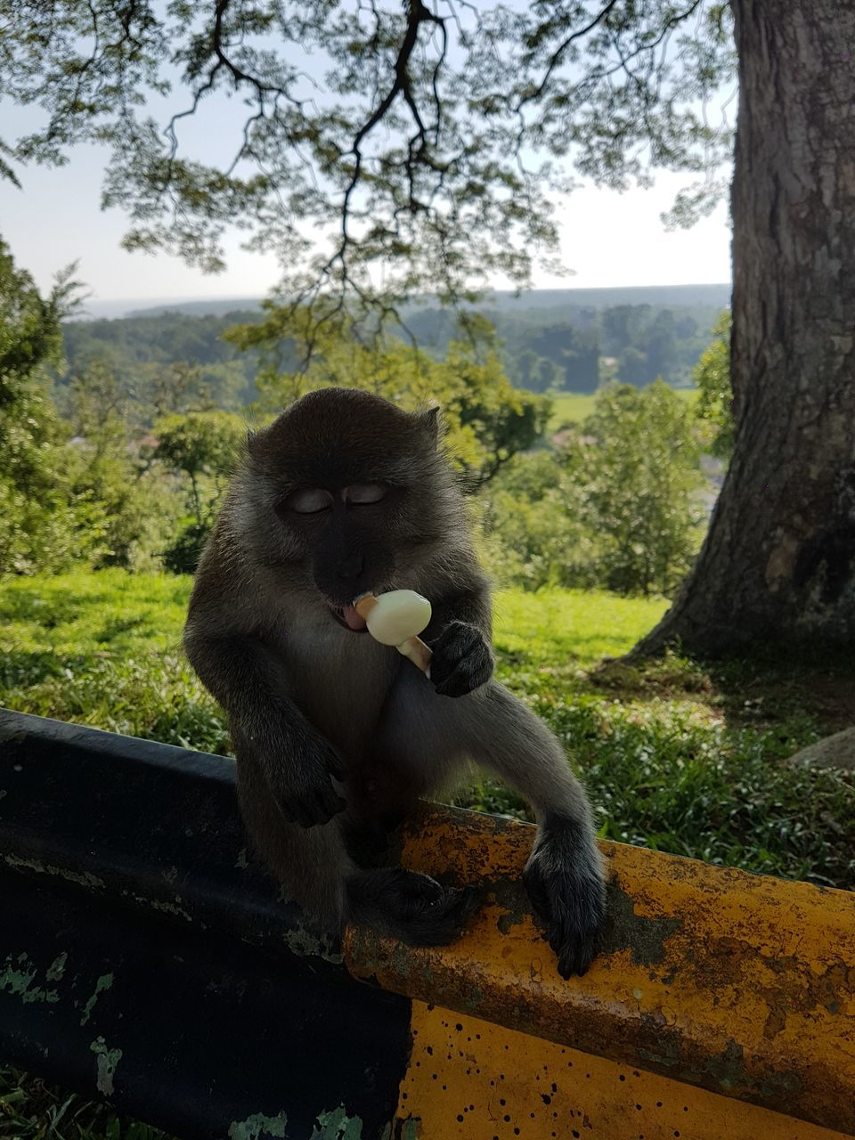 tree, animal themes, animals in the wild, one animal, animal wildlife, mammal, day, no people, outdoors, monkey, nature, sitting