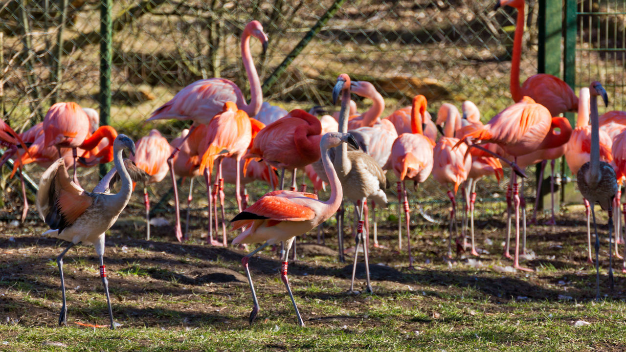 Animal Themes Animal Wildlife Animals In The Wild Beauty In Nature Bird Day Flamingo Large Group Of Animals Nature No People Outdoors Turkey - Bird Water