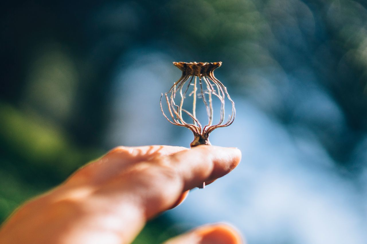 Human Hand Focus On Foreground Animal Themes Close-up Nature Animals In The Wild Human Body Part Day Outdoors Real People One Person Fragility Insect Poppy Pod Rural Poetry Beauty In Nature Nature