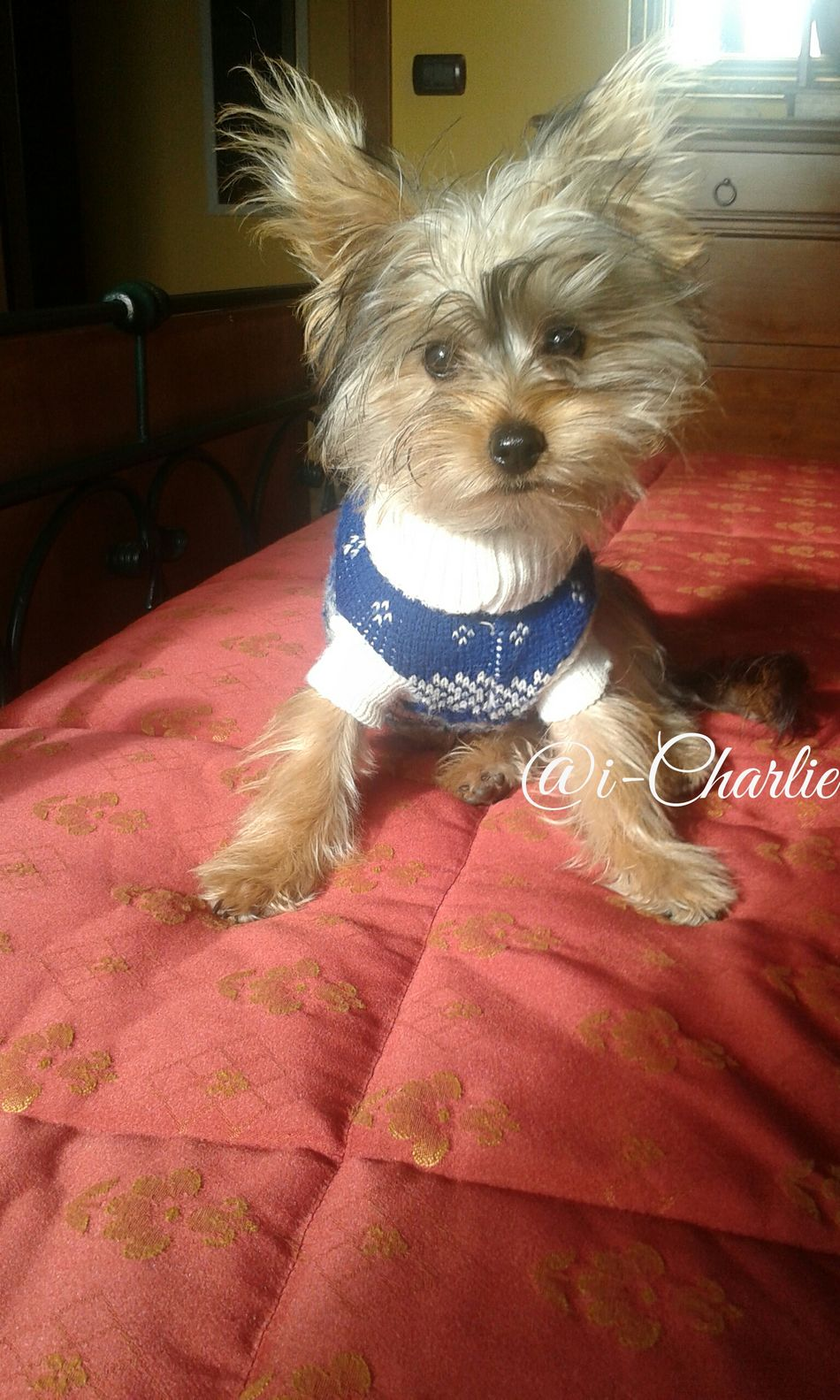 Have a nice day!! :* ♡♡ Gmorning🌞 Pet Clothing Looking At Camera Animal Themes Pets Love❤ @i-Charlie