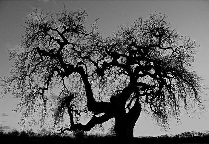 As seen on my travels to Sonoma County over the weekend. Sonomacounty Oaktree Canon Canont3
