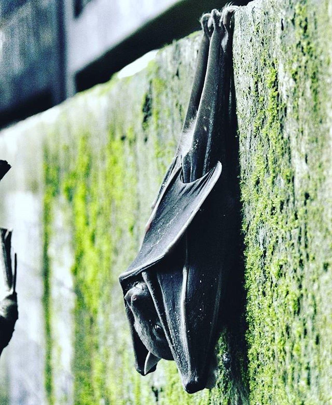 """She says """"Good Morning"""" . 💓 Morning Bat Clarendon Fade Nikonphotography Nikon_photographs L820 Nikontop Vivid 2014 Throwback Photographyislife Instadaily Photographybros"""