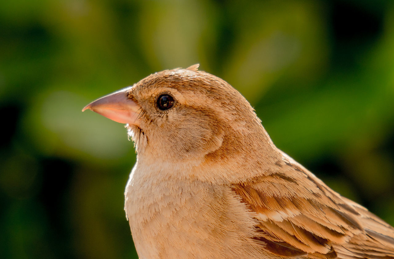 Animal Themes Animals In The Wild Bird Close-up Natura Nature One Animal Outdoors Passerotto Uccellino
