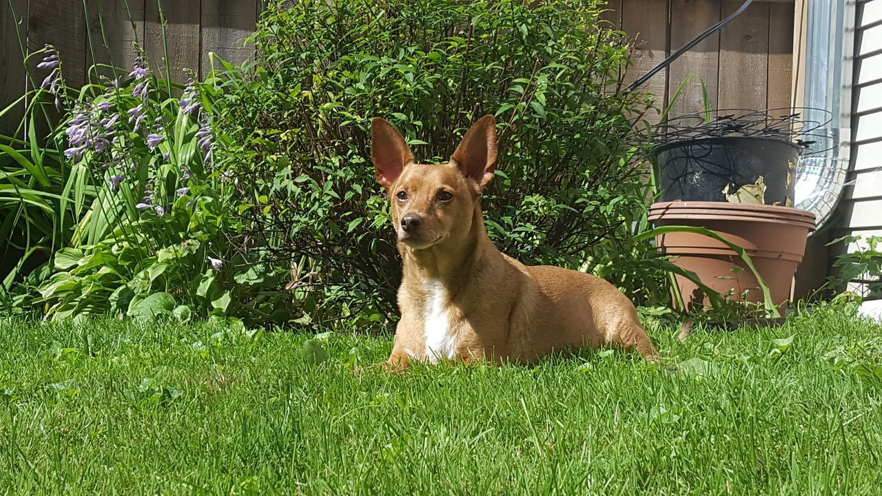 Animal Themes Dog In Backyard Dog Portrait Dog Sitting On The Grass Domestic Animals No Edit No Filter One Animal Pets