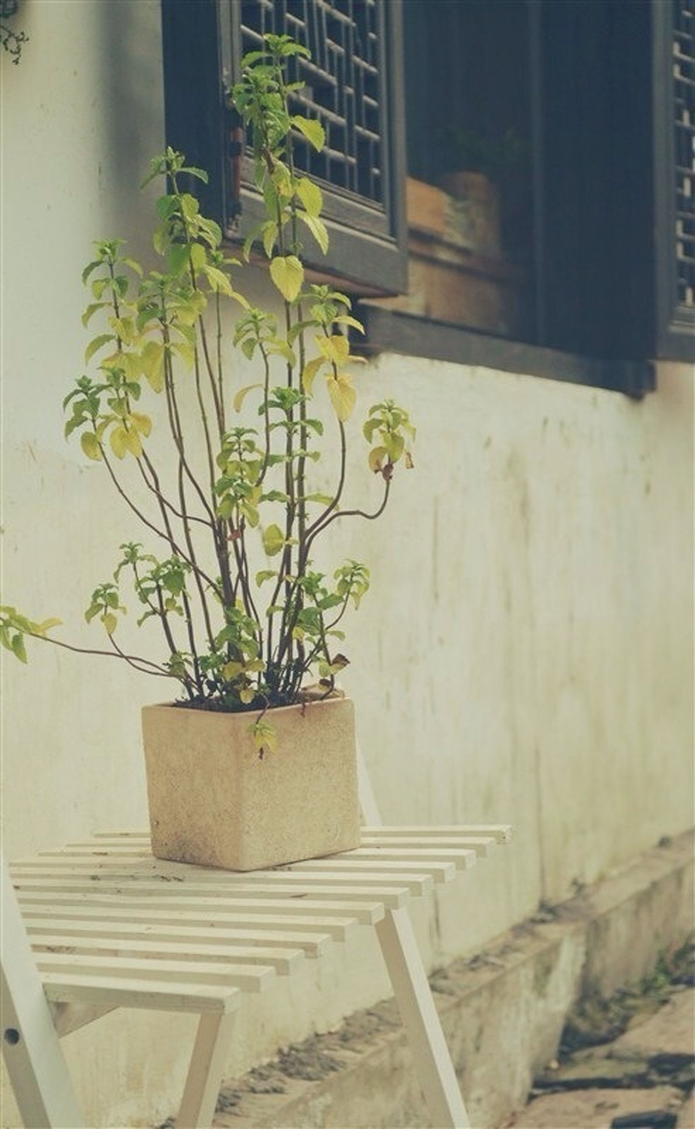 plant, potted plant, growth, built structure, architecture, flower, wall - building feature, leaf, building exterior, window, house, flower pot, wall, front or back yard, indoors, day, no people, window sill, sunlight, nature