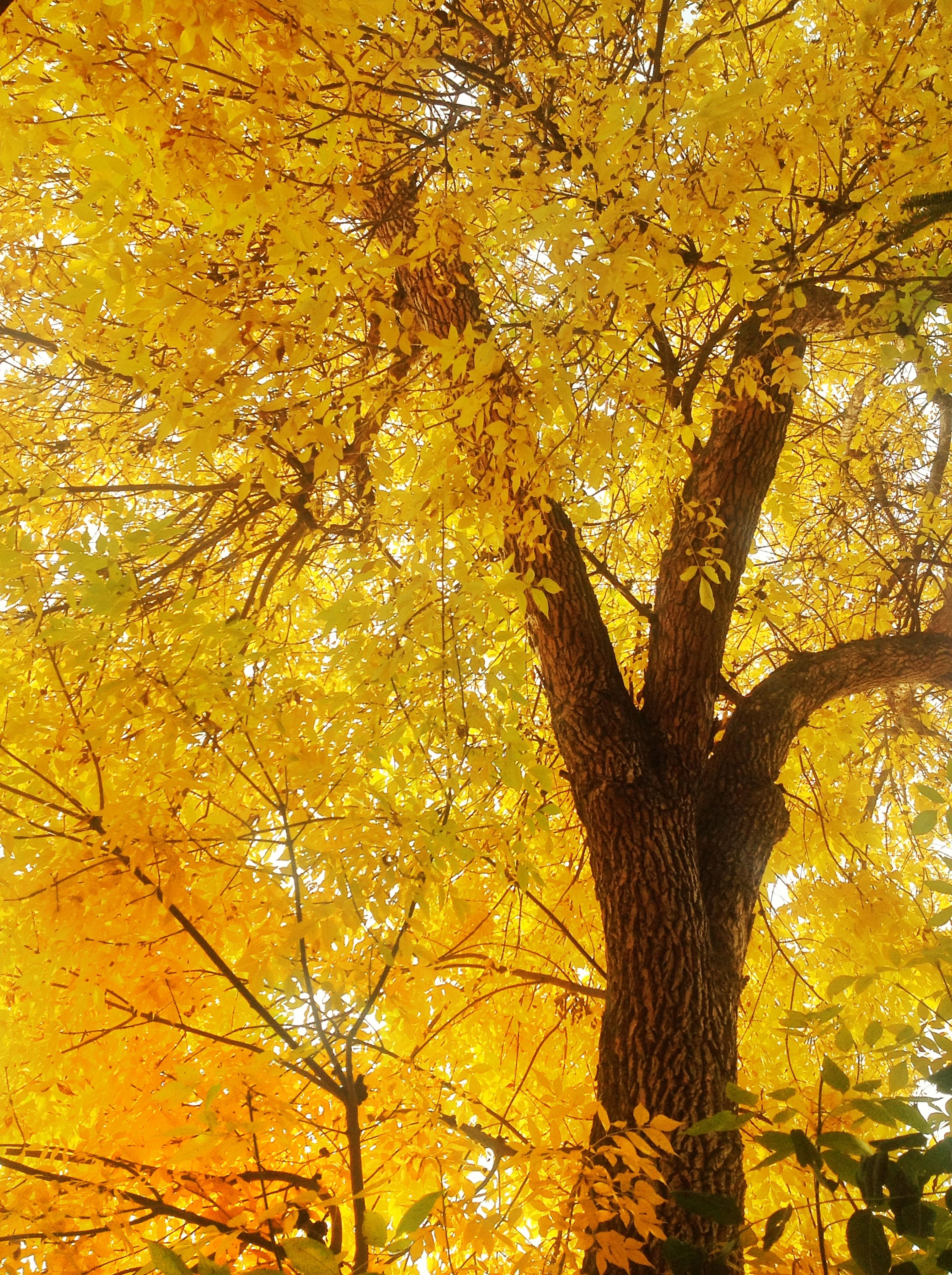 tree, yellow, low angle view, branch, autumn, growth, nature, change, beauty in nature, tree trunk, season, tranquility, full frame, scenics, backgrounds, orange color, leaf, outdoors, day, no people