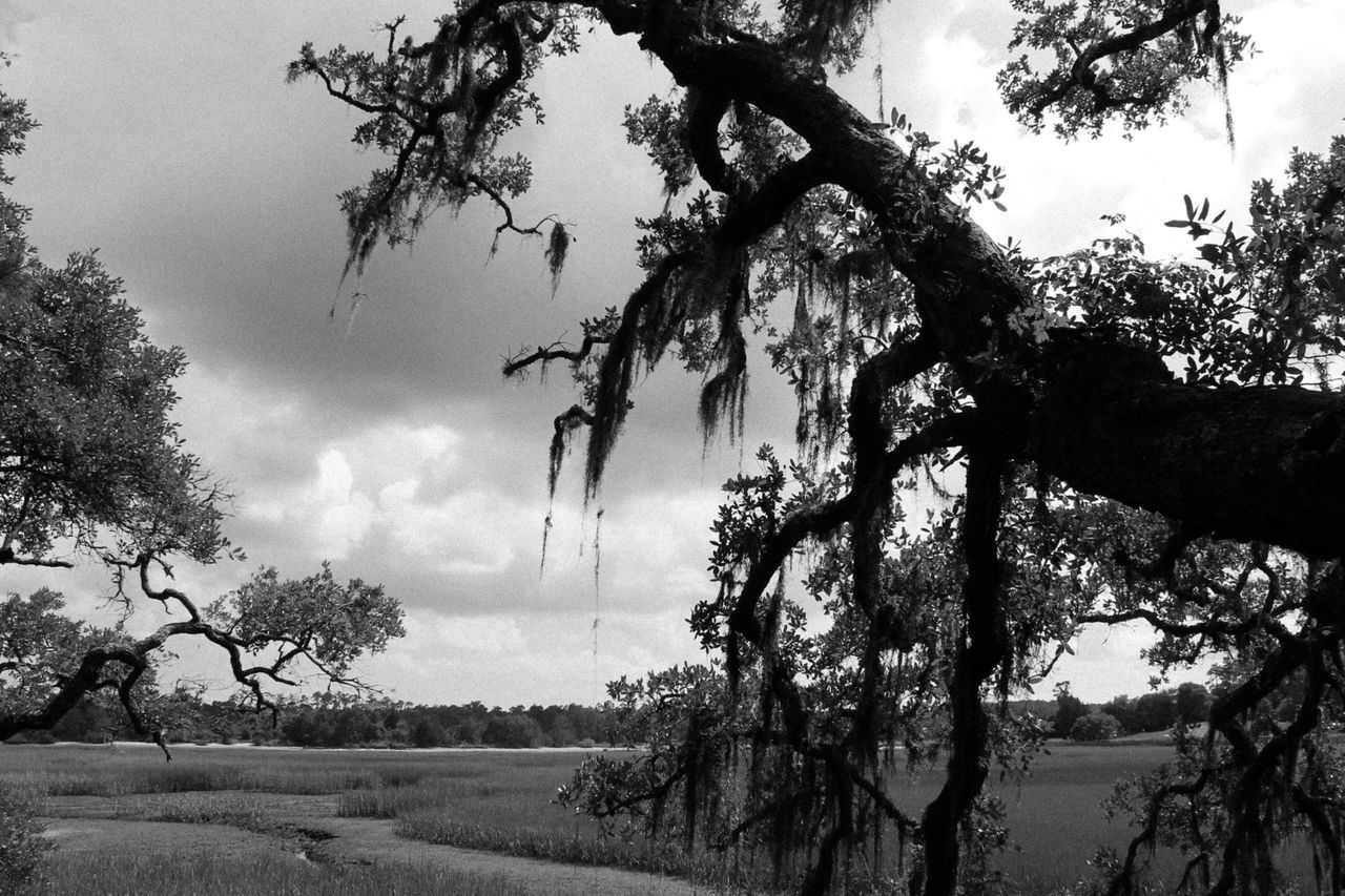 Tree Landscape Tranquil Scene Tranquility Sky Branch Growth Tree Trunk Scenics Nature Non-urban Scene Beauty In Nature Solitude Field Countryside Remote Cloud Day Cloud - Sky Outdoors Black And White Blackandwhite Black & White South Carolina Inlet