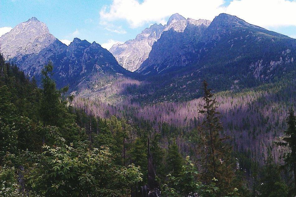 Nature Mountains Slovakia Interesting Trees Forest Exciting Trip Wild Tatry Vysoke Tatry Gemse, Vysoke Tatry, Slovakia