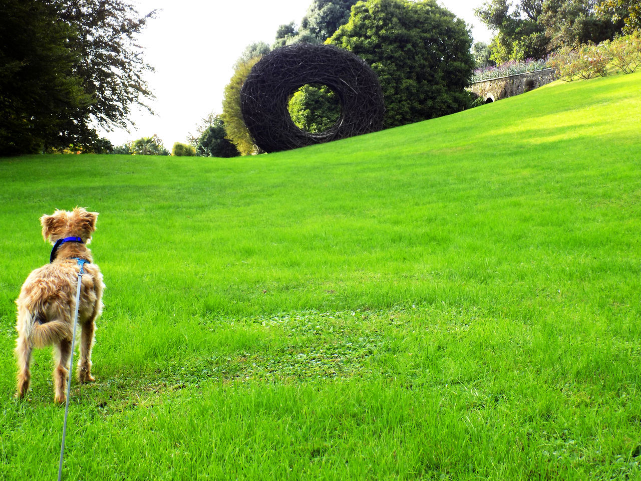 Animal Themes ArtWork Beauty In Nature Day Dog Dog At The Park Dog Love Dog On A Leash Domestic Animals Field Garden Grass Grassfield Green Color Growth Italy Mammal Nature No People One Animal Outdoors Park Pets Tree