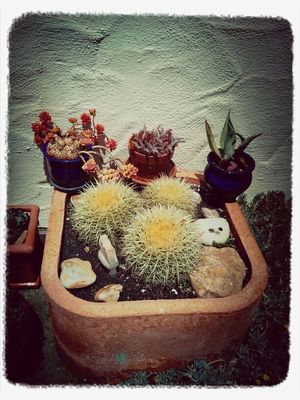 Home at backyard succulent garden by Beedie Savage