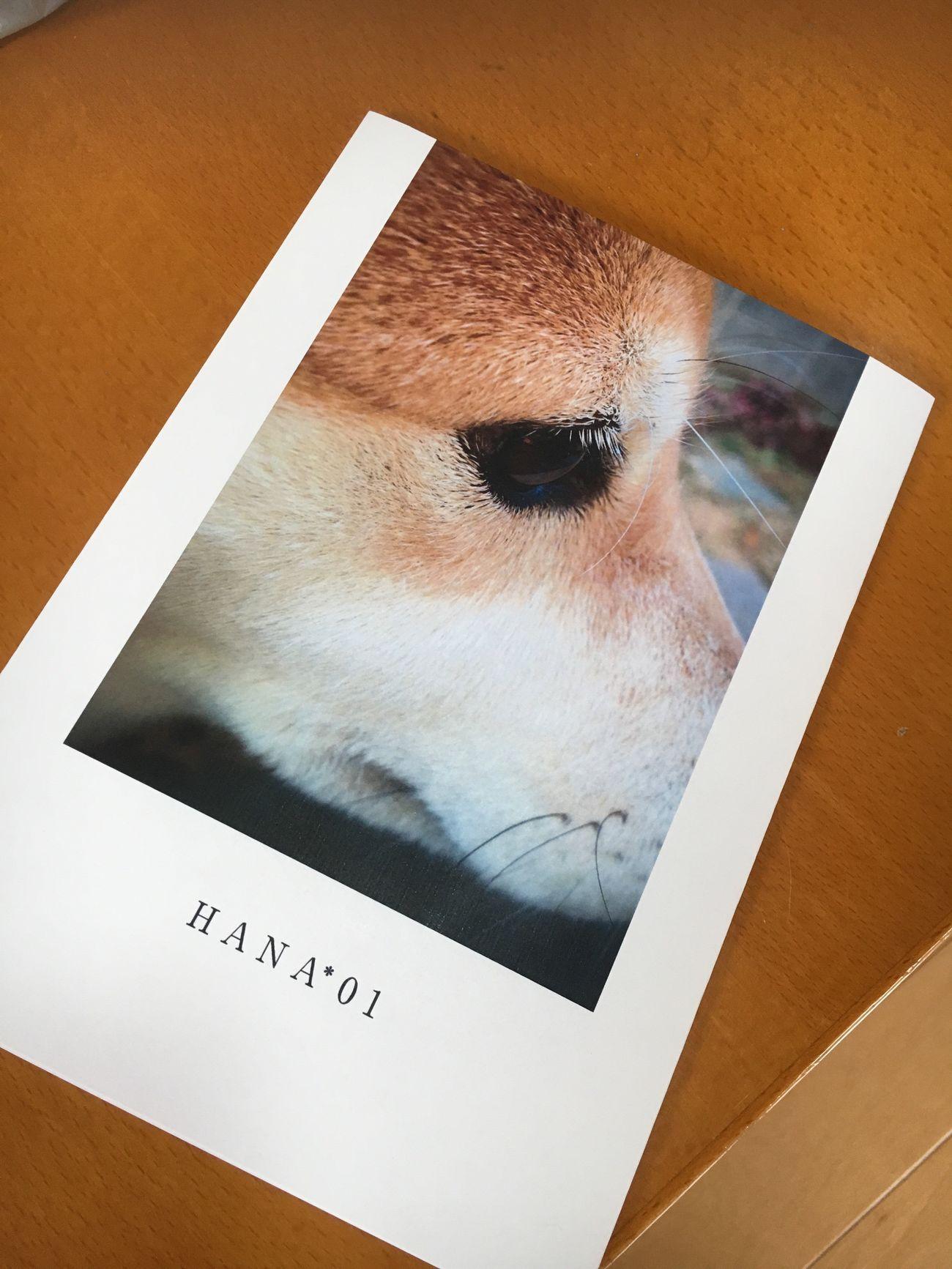 花の写真集届いた。しまうまプリントのフォトブック、予想以上に良かった Close-up Shiba Inu LOVE Shiba Inu Photobook