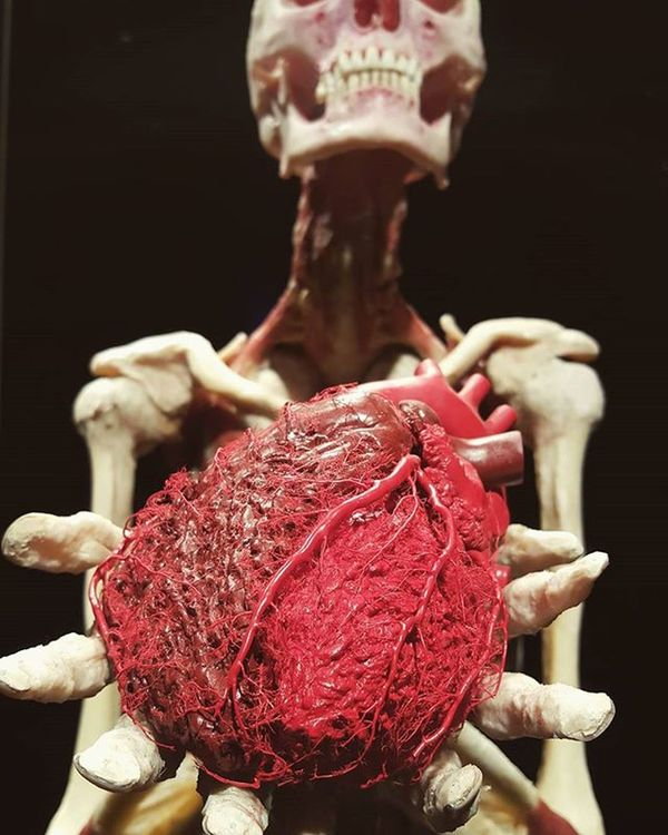 The human heart feels things the eyes cannot see and knows what the mind cannot understand. Yes, this is a real human heart properly plastinated. The guy behind is also a real body. Bodyworlds  Bodyworld Humanheart Plastination Florence