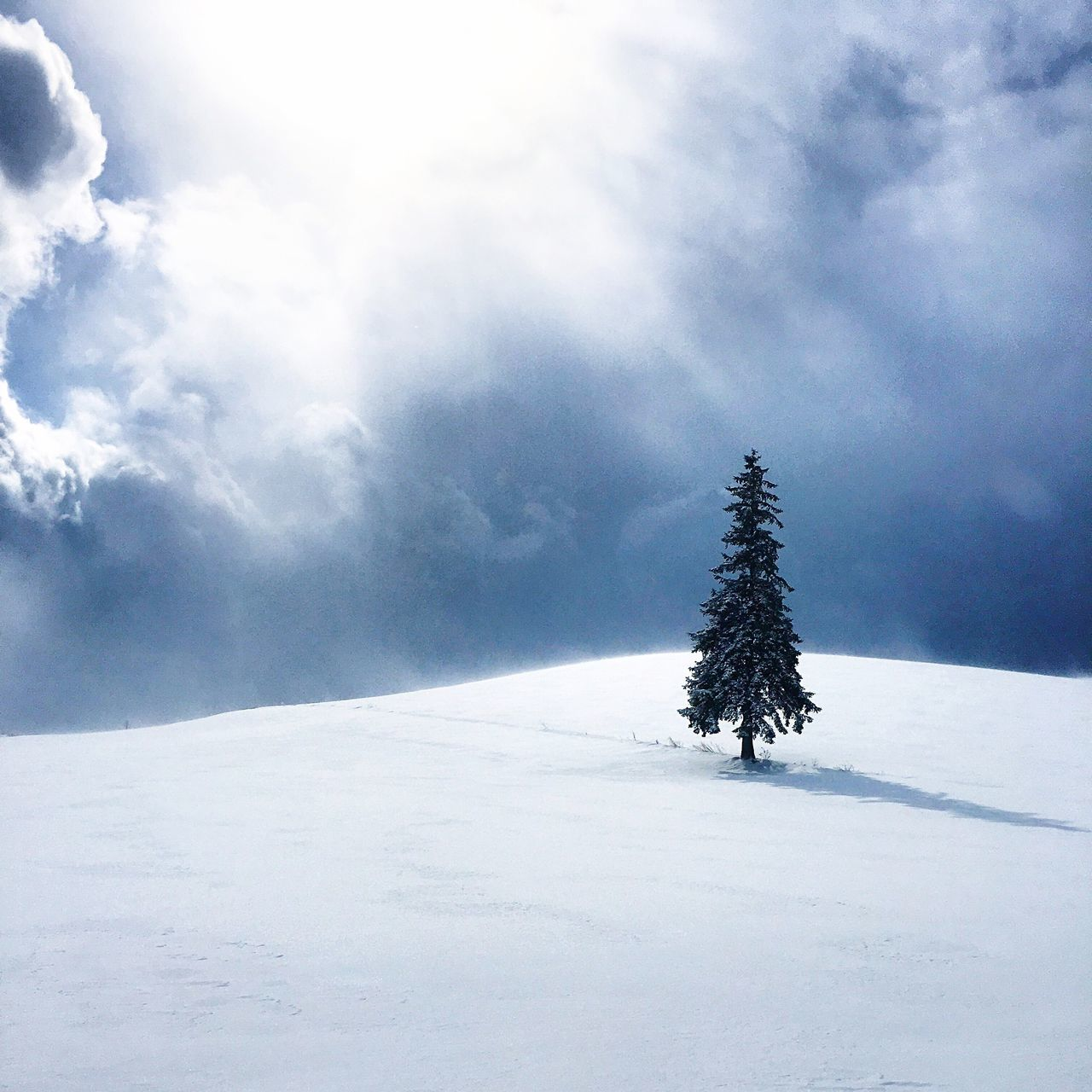 My Favorite Place Snow Cold Temperature Winter Tree Landscape Snow Covered White Single Tree Cold Beauty In Nature