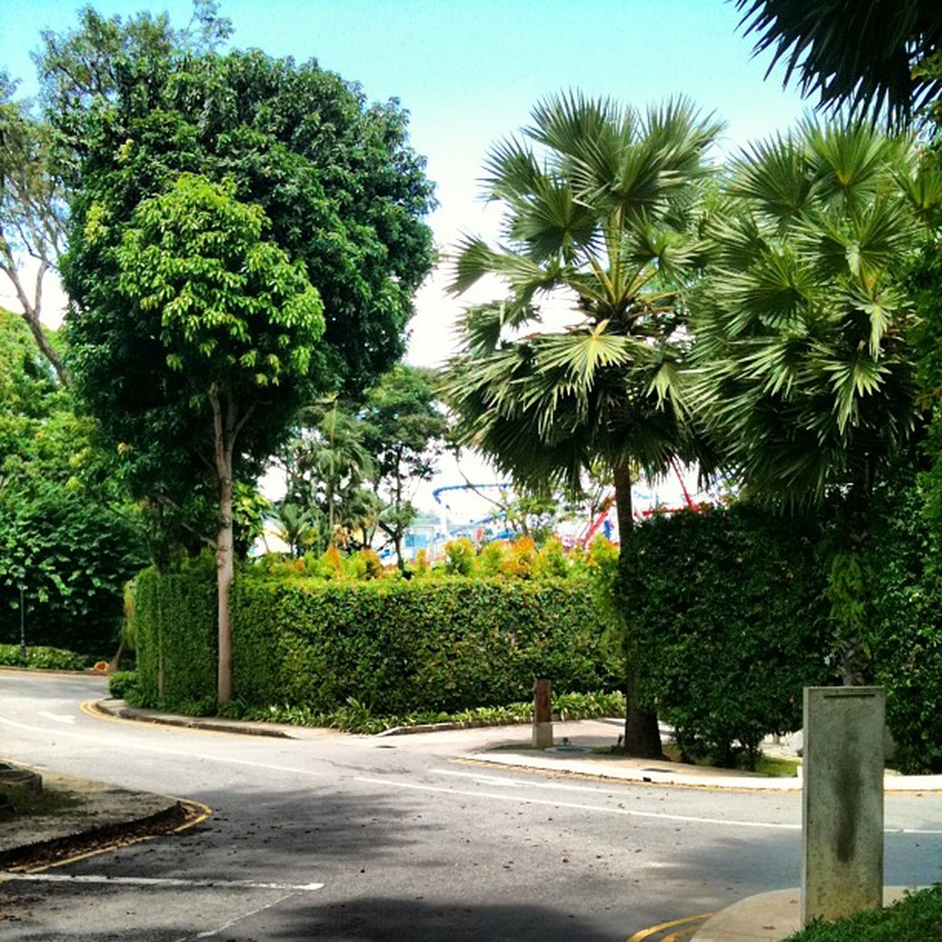 tree, road, the way forward, transportation, palm tree, growth, green color, street, sunlight, clear sky, treelined, road marking, sky, day, shadow, footpath, diminishing perspective, street light, nature, blue