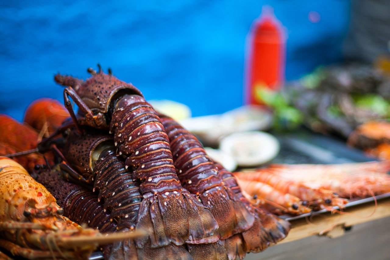 Beautiful stock photos of lobster, Food, abundance, animal Shell, close-up