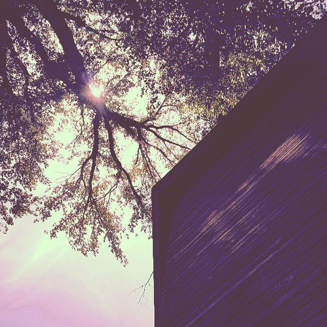 270 yr old cottonwood and a wooden silo.