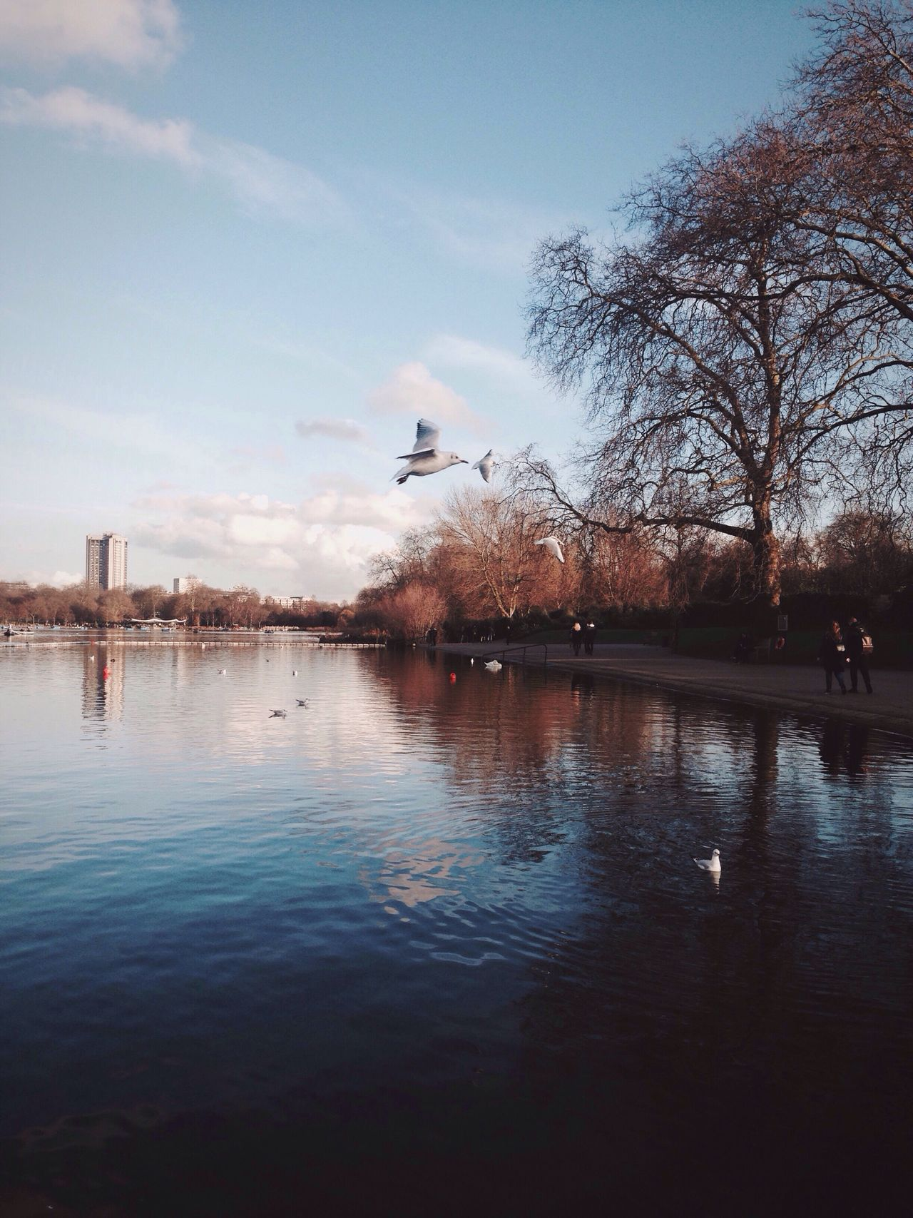 Water Bird Animal Themes Reflection Sky Animals In The Wild Flying Lake Nature Tree Built Structure Outdoors Waterfront Building Exterior Beauty In Nature No People Architecture Day City Cloud - Sky Hyde Park Nature Park Birds EyeEm LOST IN London
