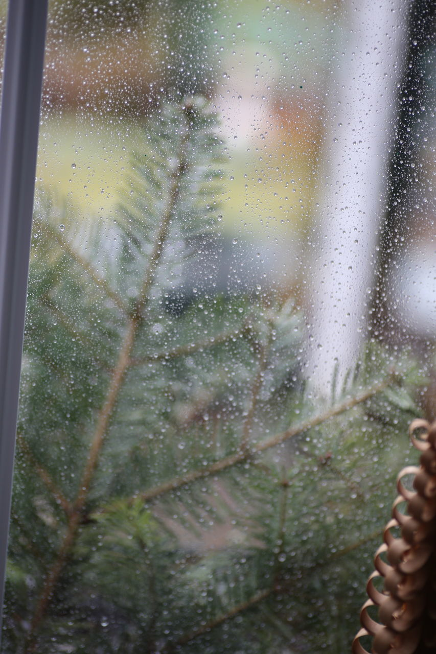 window, glass - material, rain, drop, wet, weather, water, indoors, day, close-up, looking through window, raindrop, nature, no people, tree, sky, freshness