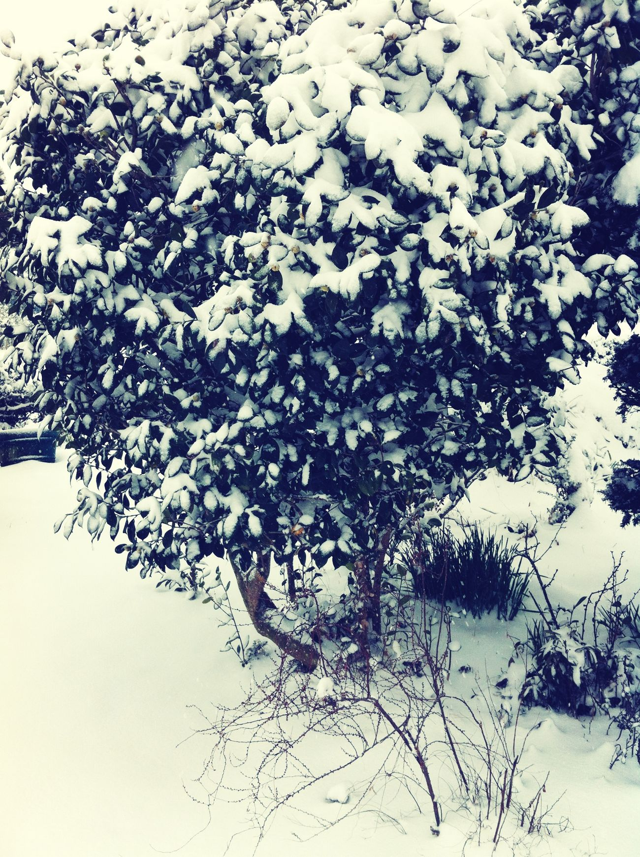 Snow Snow Trees Nature Winter