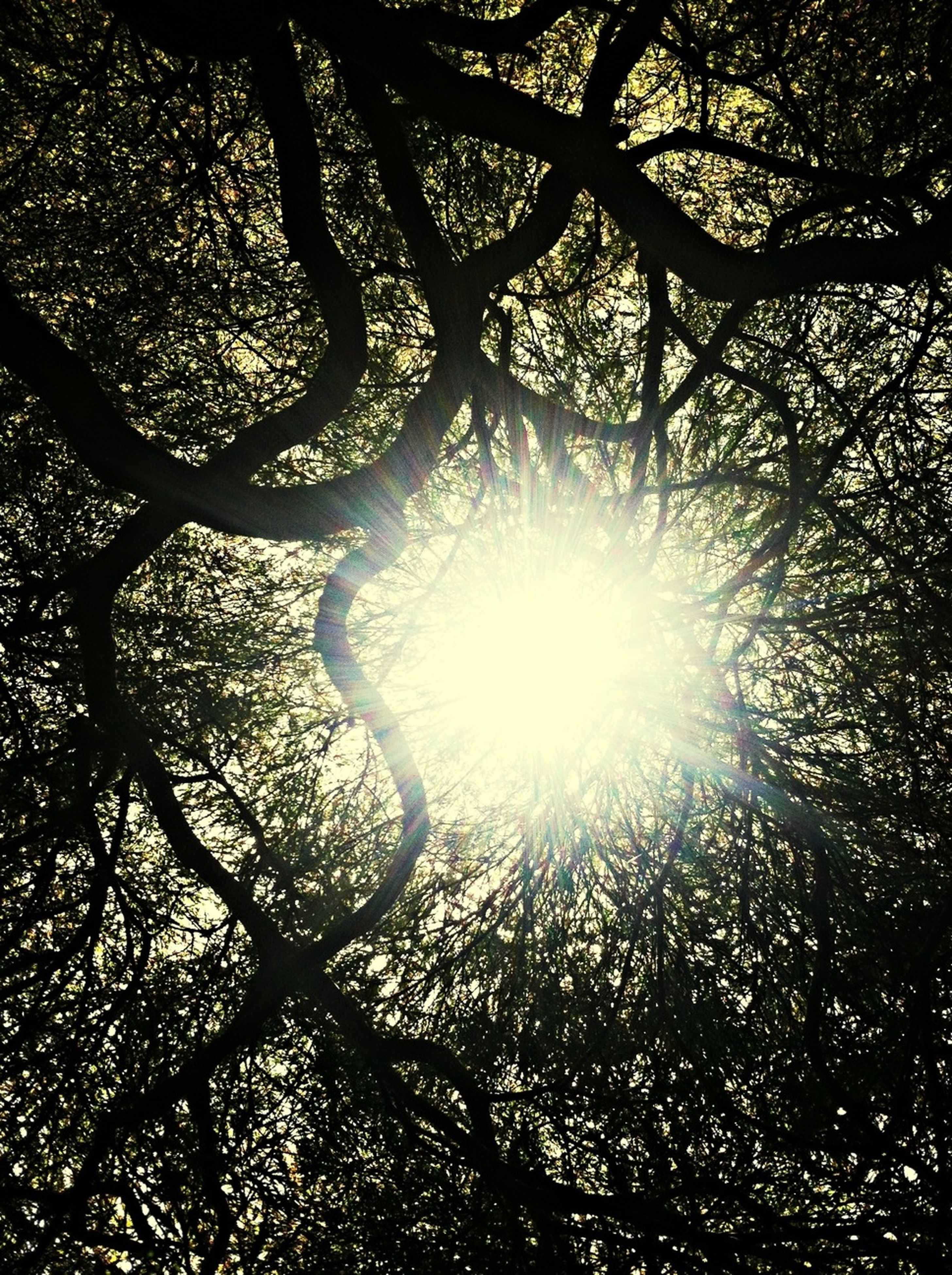 sun, tree, low angle view, sunbeam, sunlight, lens flare, branch, nature, tranquility, silhouette, beauty in nature, bright, back lit, backgrounds, full frame, growth, streaming, tree trunk, shiny, no people
