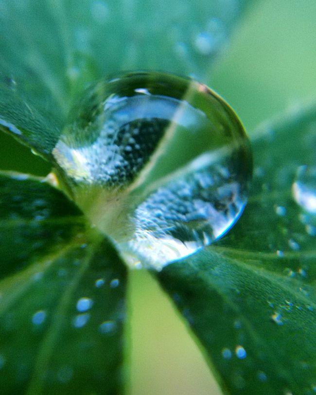 Green Color Refreshment Nature No People Green Gocce Di Pioggia Gocce D'acqua Goccedacqua