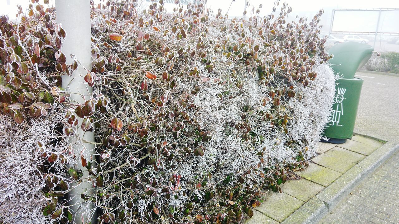 Nature Growth No People Tree Day Beauty In Nature Close-up Outdoors Cold Days Frozen Bush Streetside Misty Morning EyeEmNewHere