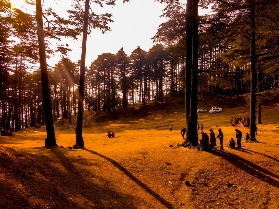 EyeEmNewHere Patnitop. Sunset Tree Sunlight Nature Outdoors Sky Large Group Of People Day People Udhampur Landscape Patnitop Nathatop Mountain Jammu Kashmir Nature Mobilephotography JammuandKashmir Motog4plus Indian Sun Sunlight